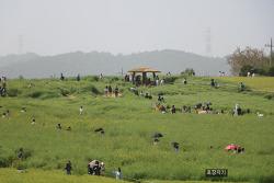 고창 청보리축제- 국립 변산자연휴양림 여행 2일차