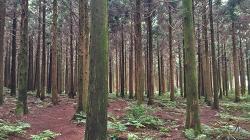 [3D 바이노럴 레코딩] #10. 제주, 사려니숲길에서 '집중이 잘 되는 자연의 소리'