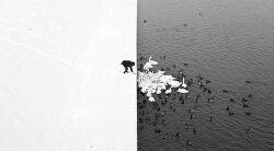 2016 시에나 국제사진전 - 흑백 1/2
