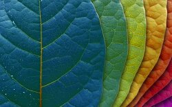 색채와 심리