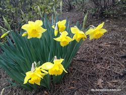 2월의 꽃, 노을지는 순간