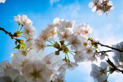 봄봄봄 꽃..