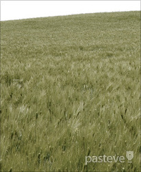 하나님의교회 알곡교회(진리교회,좋은교회)와 가라지교회(거짓교회)-패스티브