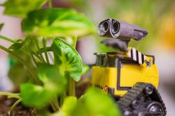 싱고니움 with Wall-E