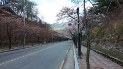 [대구올레]대구 올레 팔공산 8코스 수태지 계곡길