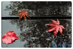 [좋은 사진]단풍을 품은 산정호수,가을비 ☆ 한국사진기자협회