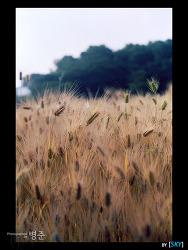 올림픽공원, 2005 가을