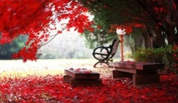 가을 연가(戀歌)