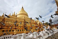 비둘기가 있는 풍경 | 미얀마, 콜롬비아, 크로아티아, 네팔