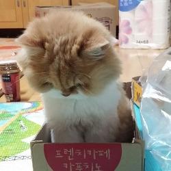 우리 고양이도 상자에 들어갈 줄 안다!