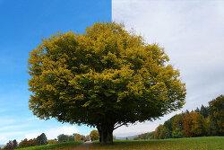 포토샵 초보 강좌 나무 따기 (Photoshop Beginner Tutorial Cut Out Tree)