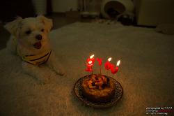 말티즈 강아지 꼬미의 다선 번째 생일 선물은?