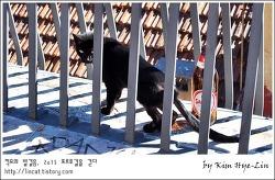 [적묘의 포르투갈]리스본  전망좋은 공원에서 만난 검은 고양이,산타 카타리나 전망대,비긴어게인2