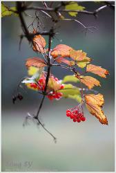 농협대학-빨간 열매