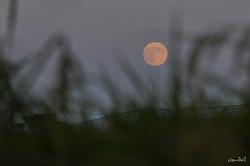 가을 들녘의 보름달