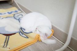 [반려동물] 폴더폰이 생각나는 아린이 수면 자세 ㅋㅅㅋ