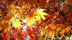 가을인게벼