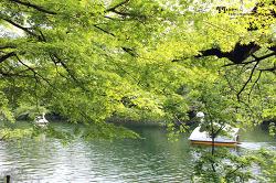 도쿄 사람들이 가장 사랑하는 공원 ::이노카시라공원(井の頭公園)