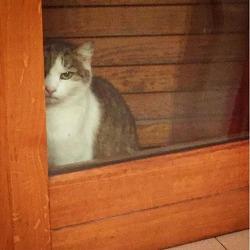 이탈리아 고양이 / 닝겐 내집에서 뭐하는거냐