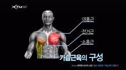 [절대남자 운동법] 4주차-남자의 상징 넓고 탄탄한 '가슴근육'만들기