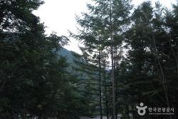 6차 산업 연 20억 매출의 대둔산 자연휴양림