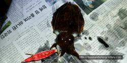 삼천포 남해권 갑오징어낚시 워킹 도보 방파제포인트 조행기