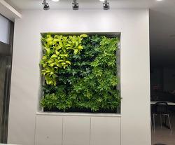 플랜테리어(plant + interior), 김영주 대표를 만나다. by 포토테라피스트 백승휴