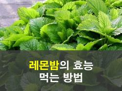 레몬밤의 효능 및 부작용 그리고 먹는 방법