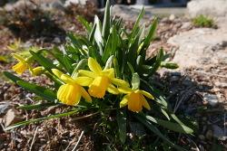 능가사의 봄