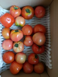 옥션특가 찰 토마토 구입 3kg -7천9백원대~맛이 진해서 좋아요