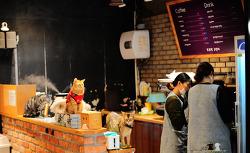 고양이 카페 '도도한 고양이'