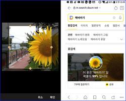 다음 꽃 검색으로 꽃 이름 찾기 (다음 앱, 다음 모바일 웹)