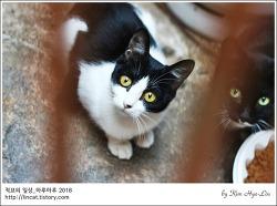 [적묘의 고양이]길고양이지만 괜찮아,서면 골목길,친절한 거리