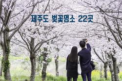 놓치면 후회되는 제주도 벚꽃명소 22곳