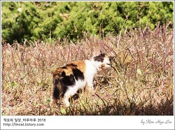[적묘의 고양이]적절한 거리,가을의 끝, 겨울 가운데, 학교 고양이들