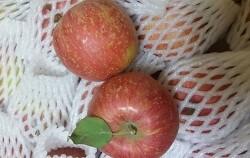 맛있는 햇살 농원 청송 사과