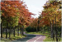 가을 산책