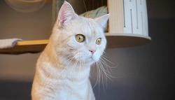 이사 후 고양이의 새집 적응기