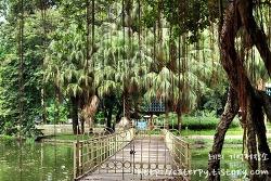 [하노이, 하롱베이] 14 둘째날:: Hanoi Botanical Garden/ 주저관저식물원