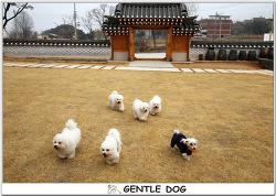 [인천 청라 가위컷 전문 젠틀독] 젠틀독 멍스타들의 강화도 나들이~~♡