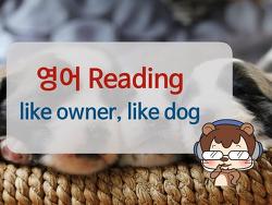 [영어독해잘하는법] Like owner, like dog 2/3ㅣ라쿤잉글리시