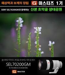 [G마스터즈1기] sony70-200gm(금유령)과 나홀로 초막골생태공원
