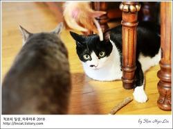 [적묘의 고양이]새 장난감,개다래나무,그리고 모노톤 자매
