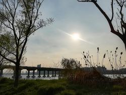 2019년 4월 한강공원 꽃구경 주말 나들이 킥보드 연날리기
