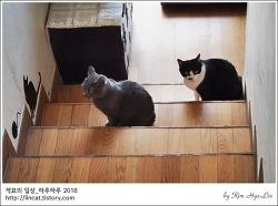[적묘의 고양이]계단의 모노톤 자매 고양이,할묘니,알고보면 냥아치 눈치싸움