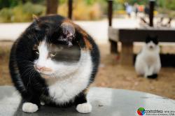 고양이 스토킹