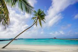 몰디브 여행 , 앳모스피어 카니푸시 리조트에서 보내는 즐거운 시간 & 가오리(스팅레이) 피딩