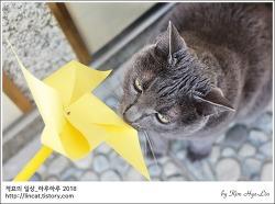 [적묘의 고양이]묘르신,모노톤자매,말린 캣닙 야미야미,몽실양과 깜찍양
