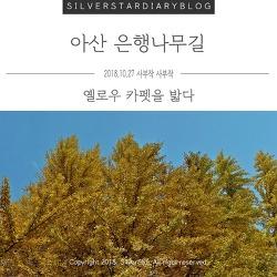 충남 아산 가볼 만한 곳 : 곡교천 옐로우 카펫 아산 은행나무길
