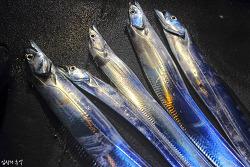 한국인이 가장 사랑하는 생선, 갈치에 관한 모든 것